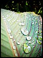 Rain shower bounty - Flickr - pinemikey.jpg