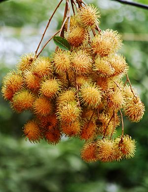 Rambutan - A cluster of yellowish rambutan.