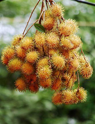 Rambutan - A cluster of yellowish rambutan.