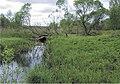 Rana temporaria - biotop in Ukraine.jpg