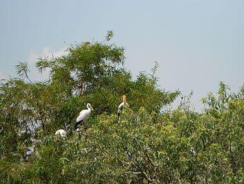 Ranganthittu-Birds Sanctuary-Karnataka-India.jpg