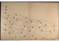 Red Horse pictographic account of the Battle of the Little Bighorn, 1881. 0500.png