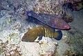 Red sea-reef 3929.jpg