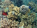 Reef at the private beach of Moevenpick El Gouna - panoramio.jpg