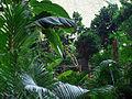 Regenwald-treppe600x450.jpg