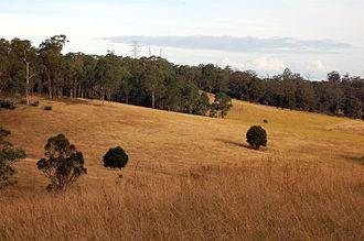 Greater Western Sydney - A dry sclerophyl, eucalyptus forest in Abbotsbury.
