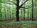 Rezerwat Ostra Góra Polska 35.jpg