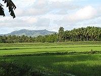 Rice fields milagr 1 galleryfull.jpg