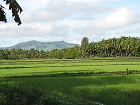Rice fields milagr 1 galleryfull.jpg