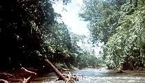 Rio platano.jpg