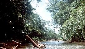 Plastic Tano River