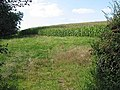 Ripening maize crop, Bulley Lane - geograph.org.uk - 536684.jpg