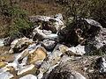 Rishikesh harikempty fallsdwar (398).JPG