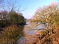River Tees - geograph.org.uk - 114305.jpg