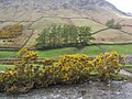 Riverbank gorse and lower slopes of Yewbarrow, Wasdale Head - geograph.org.uk - 785371.jpg