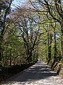 Road through Grammarcombe Wood - geograph.org.uk - 1271426.jpg