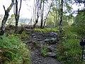 Rocky path on Ben Lomond climb - geograph.org.uk - 563520.jpg
