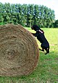 Rolling Up - panoramio.jpg