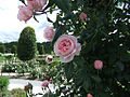 RoseGarden (4646932383).jpg