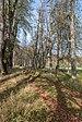 Rosegg Linden-Allee in nördlicher Richtung vom Schloss 25102019 7414.jpg