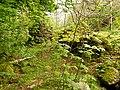 Ruin among the Trees (geograph 2920751).jpg