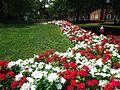 Rutgers University College Avenue campus July 2016 flowers along a walkway.jpg
