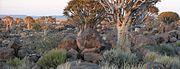 SAC Namibia-bushveld