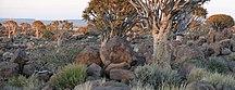 Namibija-Zaščita divjine-SAC Namibia-bushveld