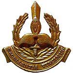 SANDF 9 Division Beret badge