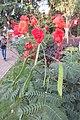 SZ 深圳 Shenzhen 羅湖 Luohu District Wenjin North Road 洪湖公園 Honghu Park Dec-2017 IX1 紅蝴蝶 Caesalpinia pulcherrima 番蝴蝶 洋金鳳 黃蝴蝶 豆科 蘇木屬 red flowers green leaves plant 11.jpg