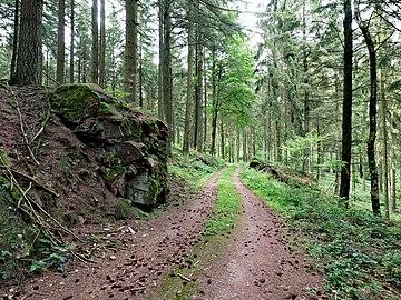 Saar-Steilhänge Lutwinuswald-10.jpg