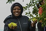 Sailors pick apples for North Whidbey Help House 160923-N-WQ574-005.jpg