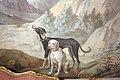 Sala della caccia, affreschi attr. a giuseppe del moro, 13 cane.JPG