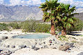 Saline Valley Palm Spring.jpg