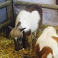Salonducheval2015-toyhorses.jpg