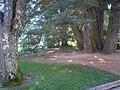 San Ildefonso - Palacio Real de la Granja, Jardines del Medio Punto (cedro de Libano) 1.JPG