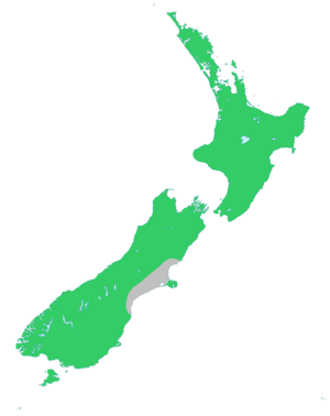 Fuchsia excorticata