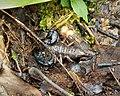 Scorpion (48759662157).jpg
