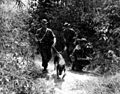 Scout dog leading patrol in search for Vietcong.jpg