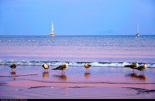 Sea (6226054714)
