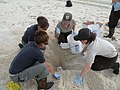 Sea turtle nest reolcation (4790362380).jpg