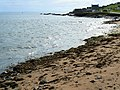 Seaweed on the shore - geograph.org.uk - 948645.jpg