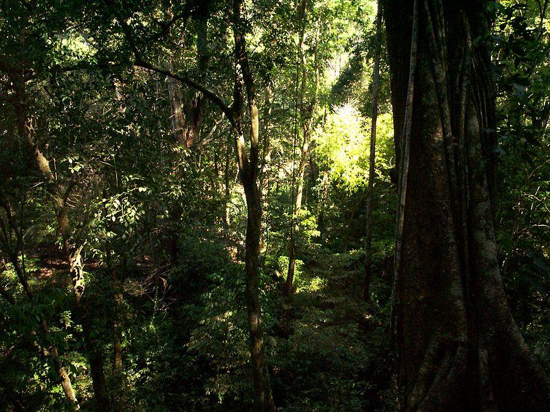 File:Selva Lacandona.JPG