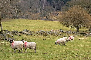 English: Sheep Pasture, Near Cow Wath
