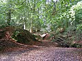 Shepherd's Gutter, New Forest - geograph.org.uk - 251120.jpg