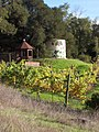 Shiloh Hill Vineyard in Chalk Hill.jpg