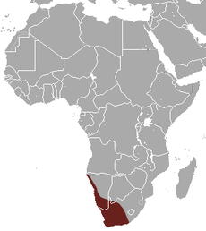 Short-eared Elephant Shrew area.png