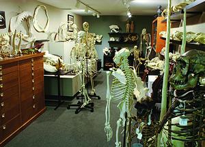 Bone Clones - Bone Clones showroom