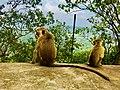Sigiriya Rock Sri lanka.jpg