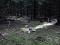 Silber Wald.jpg